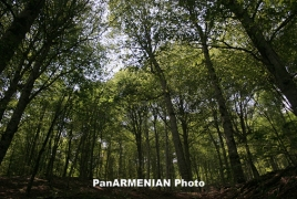 Tropical timberland pot threatened by tellurian activity