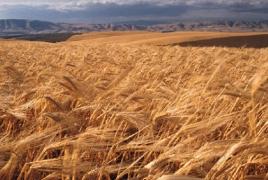 U.N. group posts pointy dump in tellurian food prices